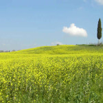Barberino Val d'Elsa, Chianti, Tuscany, Italy. Author and Copyright Marco Ramerini