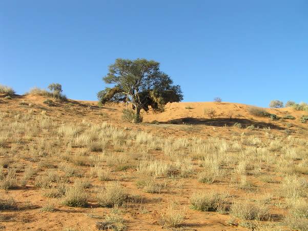 Kalahari Desert, Kgalagadi Transfrontier Park, South ...
