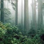 Redwood National Park, California, United States of America. Author NPS Photo. No Copyright