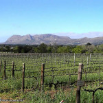 Vineyards of Groot Constantia, Cape Town, South Africa. Author and Copyright Marco Ramerini