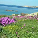 Isola Rossa, Sardinie, Itálie. Author and Copyright Marco Ramerini