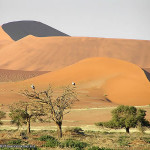 Namib Desert, Namib-Naukluft, Namibia. Author and Copyright Marco Ramerini..