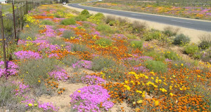 Namaqualand, South Africa. Author and Copyright Marco Ramerini