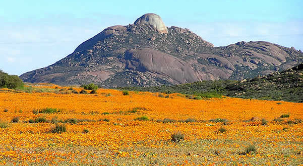Namaqualand, South Africa. Author and Copyright Marco Ramerini..