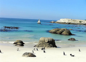Penguins at Foxy Beach, Boulders Beach, Cape Town, South Africa. Autore e Copyright Marco Ramerini