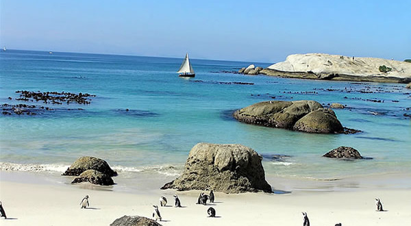 Penguins at Foxy Beach, Boulders Beach, Cape Town, South Africa. Autore e Copyright Marco Ramerini