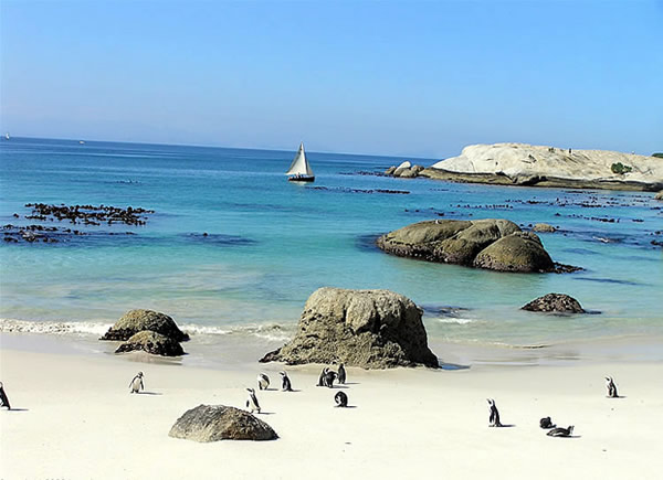 Pinguine am Foxy Beach, Boulders Beach, Kapstadt, Südafrika. Autor Ramerini