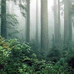 Redwood National Park, California, United States of America. Author NPS Photo. No Copyright