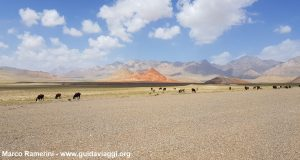 Animals grazing after the border between Kyrgyzstan and China. Author and Copyright Marco Ramerini
