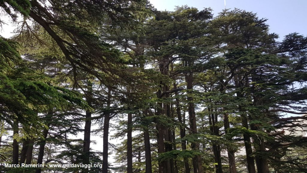 The forest of the Cedars of God, Lebanon. Author and Copyright Marco Ramerini