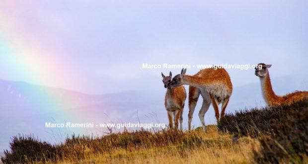 Guanachi, Torres del Paine National Park, Chile. Author and Copyright Marco Ramerini