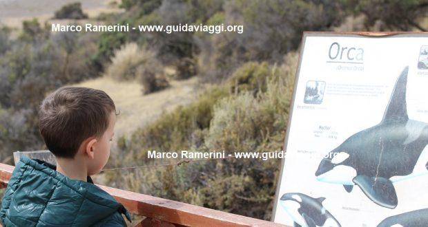 Mattia in Punta Norte, Valdes Peninsula, Argentina. Author and Copyright Marco Ramerini
