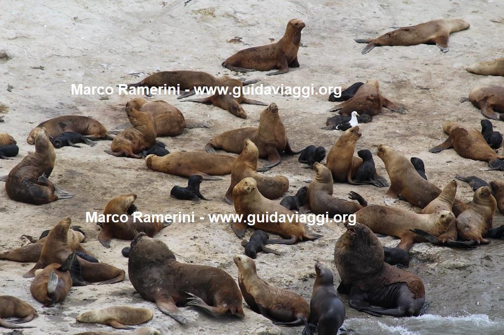 Punta Pirámide, Valdés Peninsula, Argentina. Author and Copyright Marco Ramerini