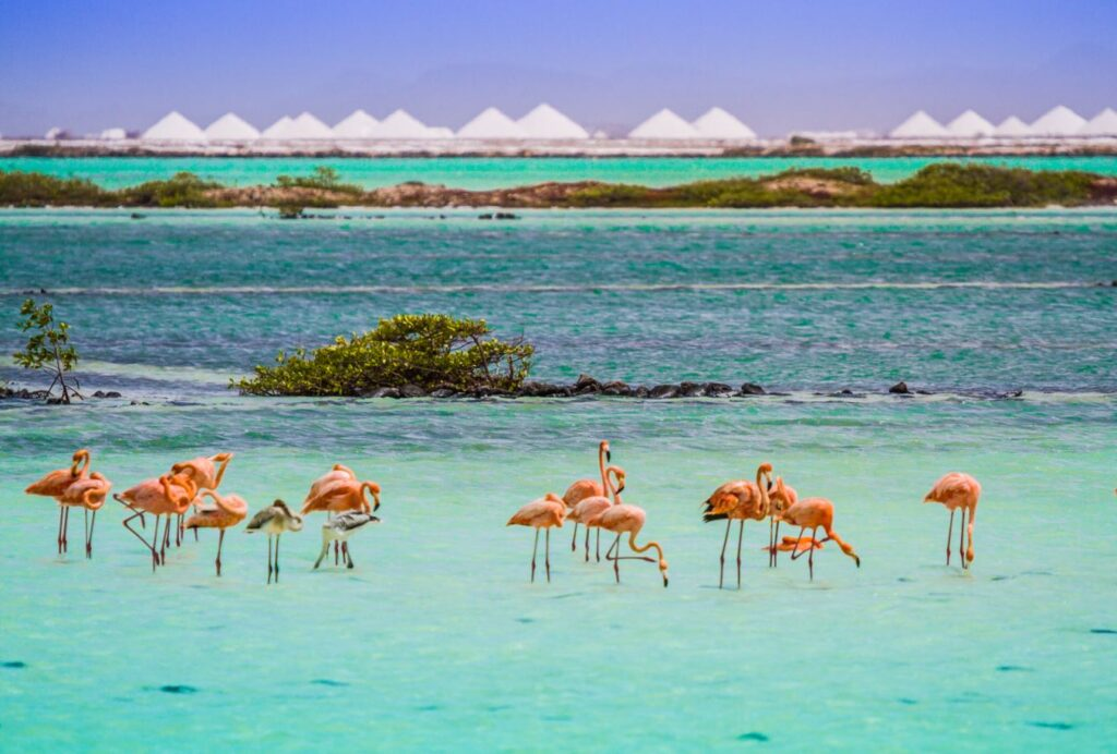 Flamingos, Bonaire. Photo Credit Bonaire Tourism