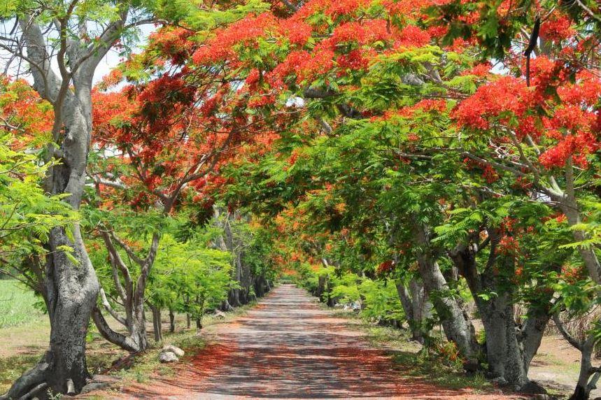 Pamplemousses Botanical Garden. Credit Mauritius Tourism