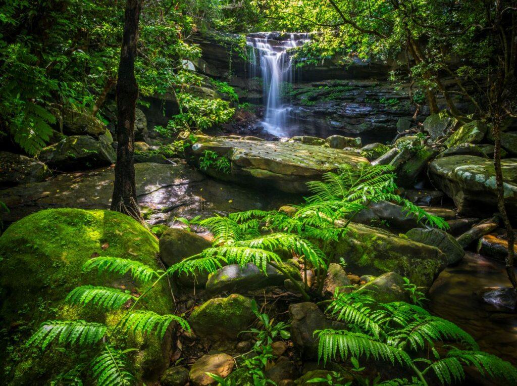 Kura Falls, Iriomote Island, Yaeyama Islands, Okinawa Prefecture, Japan. Credit [©Okinawa Convention&Visitors Bureau] or [©OCVB]