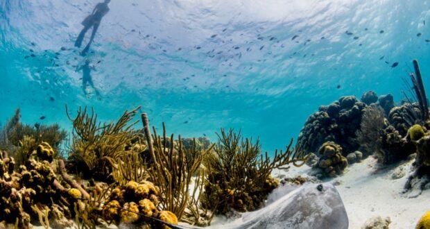 Das Korallenriff von Bonaire. Photo Credit Bonaire Tourism