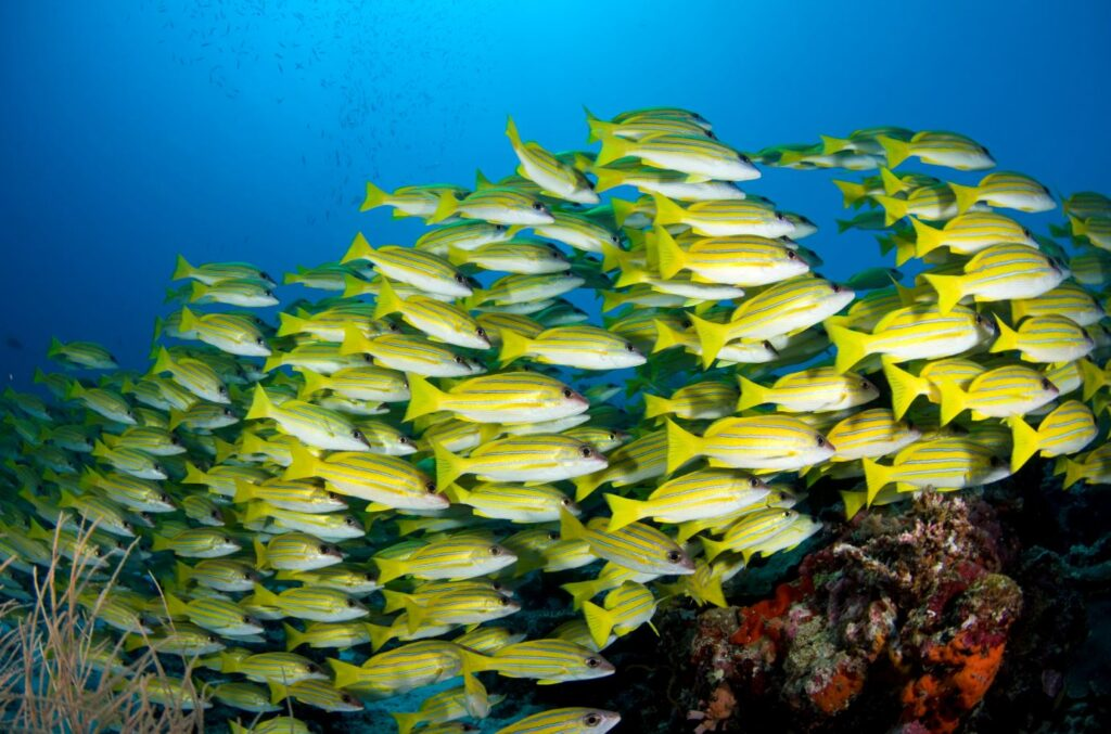 Coral reef fish of the Maldives. Credit Maldives Tourism