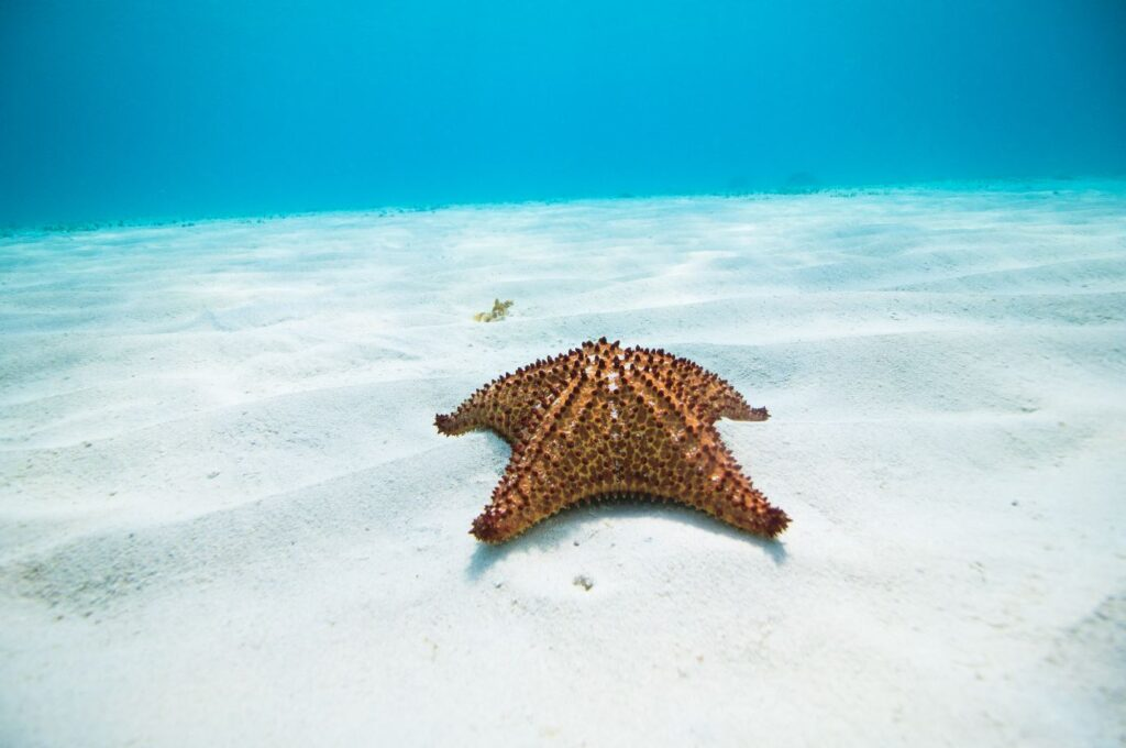 Starfish, Aruba. Photo Aruba Tourism Authority.